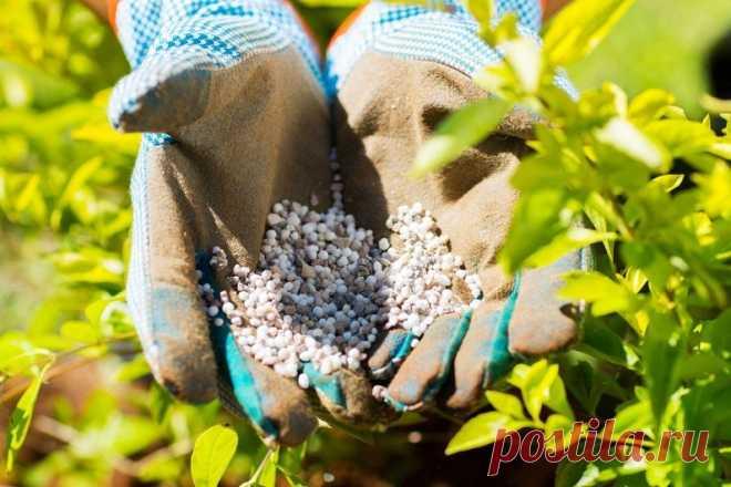 Виды удобрений для огорода и сада К сожалению, далеко не у всех из нас есть возможность приобретать большие участки земли для создания огорода, потому зачастую выбранный клочок земли засажен так густо различными фруктами и овощами, что …