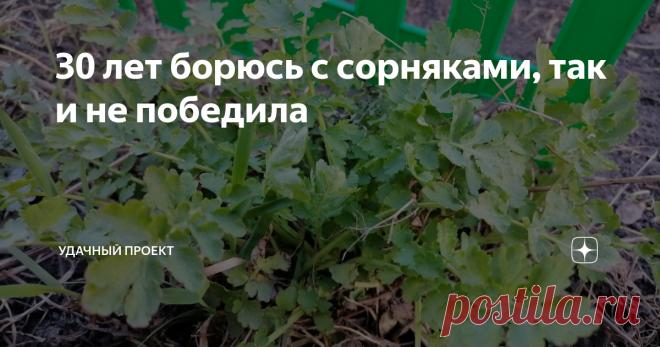 30 лет борюсь с сорняками, так и не победила Часто читаю в комментариях:
