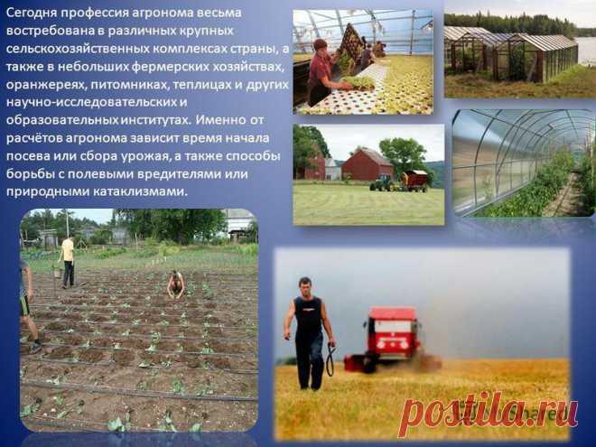 Реферат Крестьянские фермерские хозяйства pib samara ru Сочинение на тему фермерское хозяйство